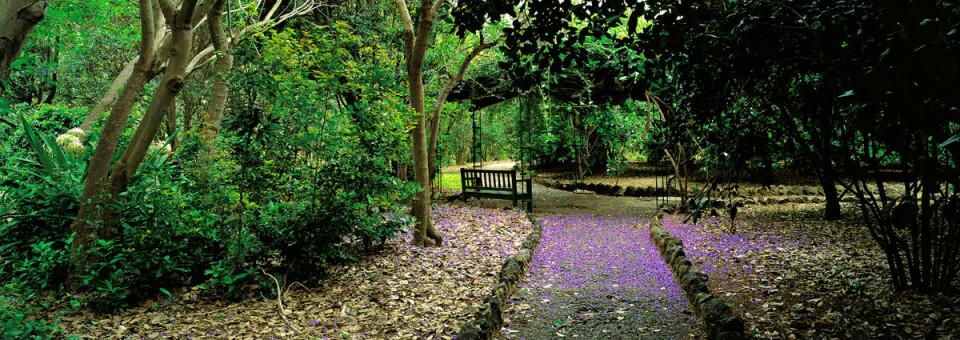 Tour Bicicleta (Martes): Jardín Canario y Zona Vegueta
