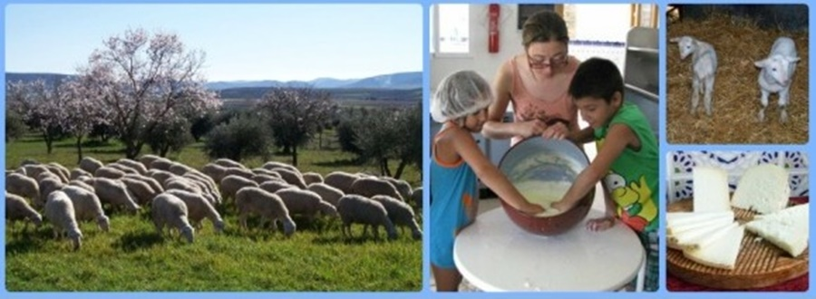 Visit Cheese factory in Gran Canaria