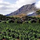 Vacaciones en Gran Canaria, visita Bodega Las Tirajanas