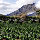 Holidays in Gran Canaria, visit Bodega Las Tirajanas