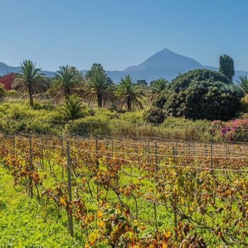 Tour gastronómico y enológicos en Tenerife (Bodegas del Norte)
