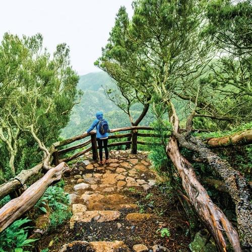 Parque nacional de Garajonay para grupos