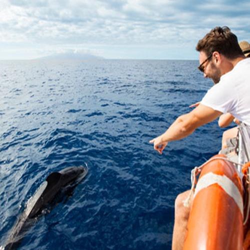 Excursiones avistamiento de delfines en Gran Canaria
