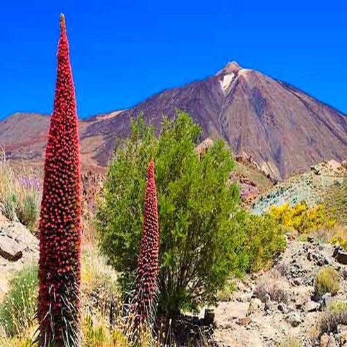 El Parque Nacional del Teide, excursiones para grupos